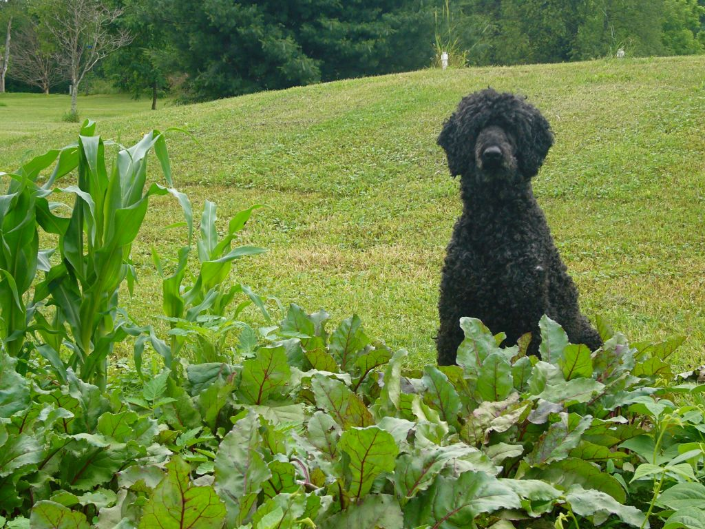 in which we say goodbye: to a beloved friend and commercial dog food