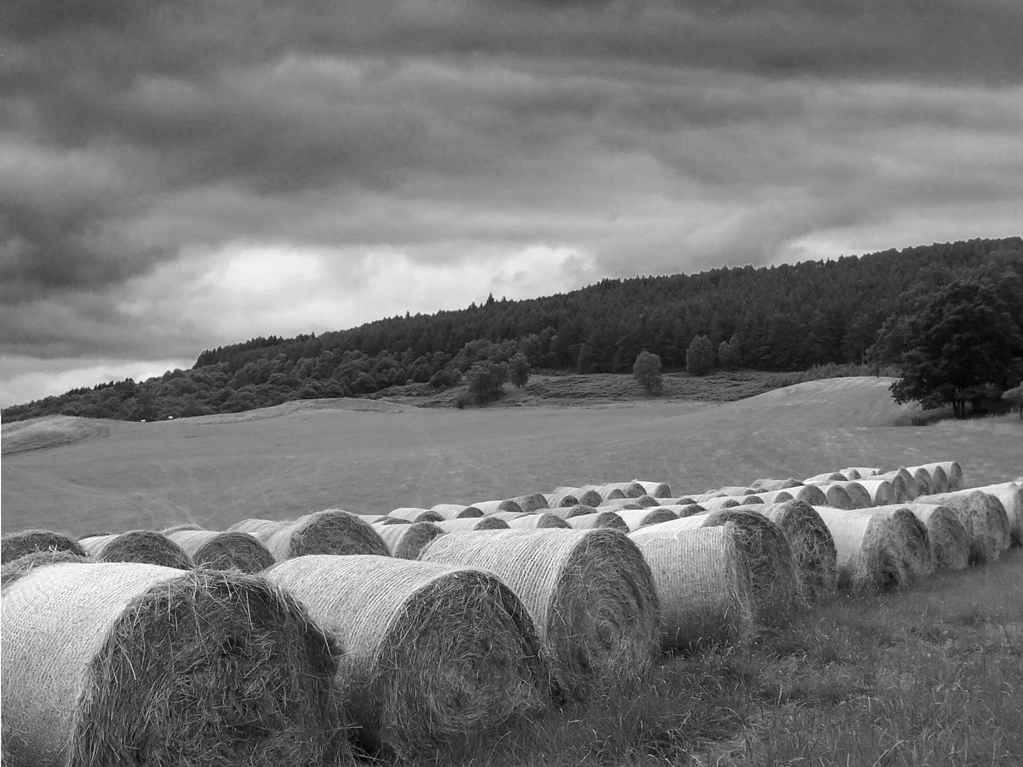 Farm Black And White To a small livestock farm.