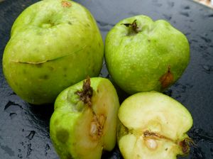 In which we can't stop thinking about apples