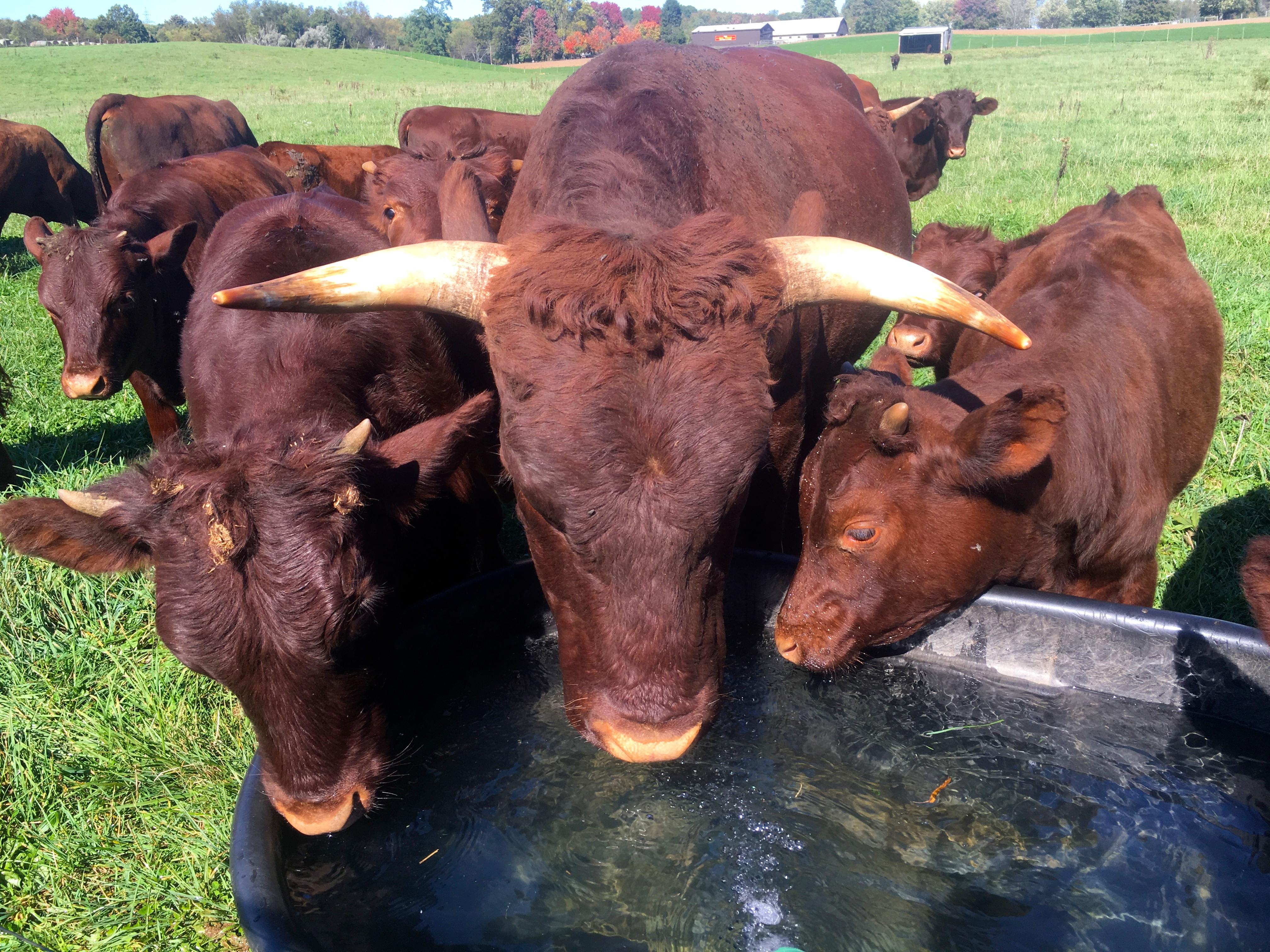 Auburn Meadow Farm | A modern heritage foodstead